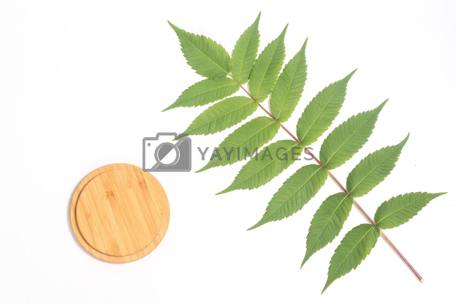 Bamboo Cutting Board with green leaf white whalnu on white background. Eco friendly housekeeping concept