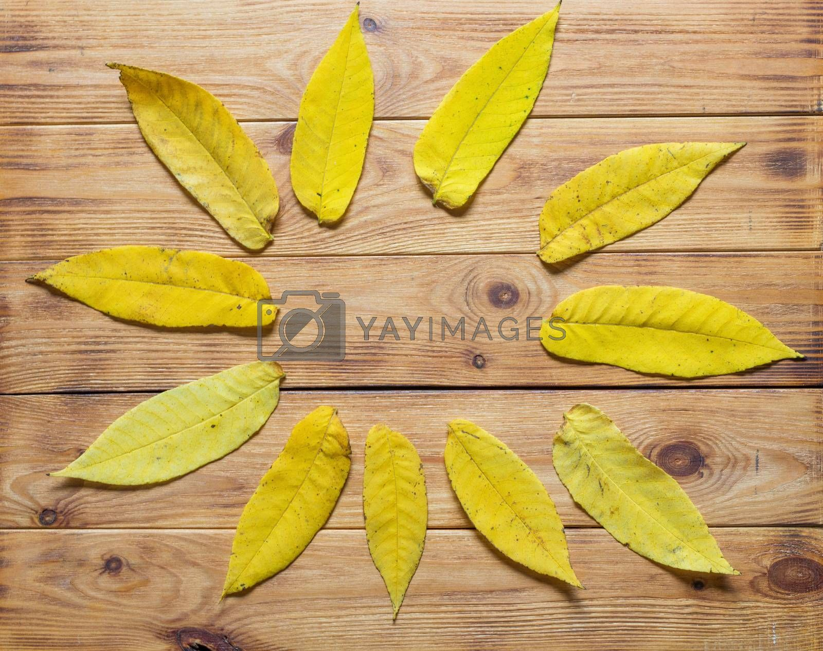 Top view of frame of multicolored fallen leaves on wooden background.