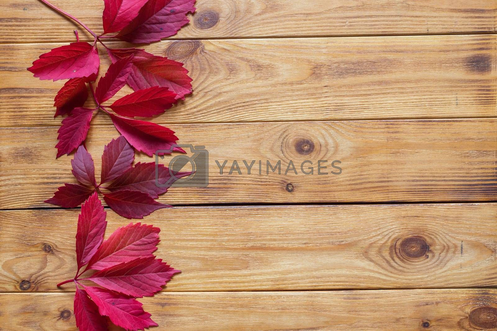 Autumn flat lay with colorful fallen leaves on wooden background
