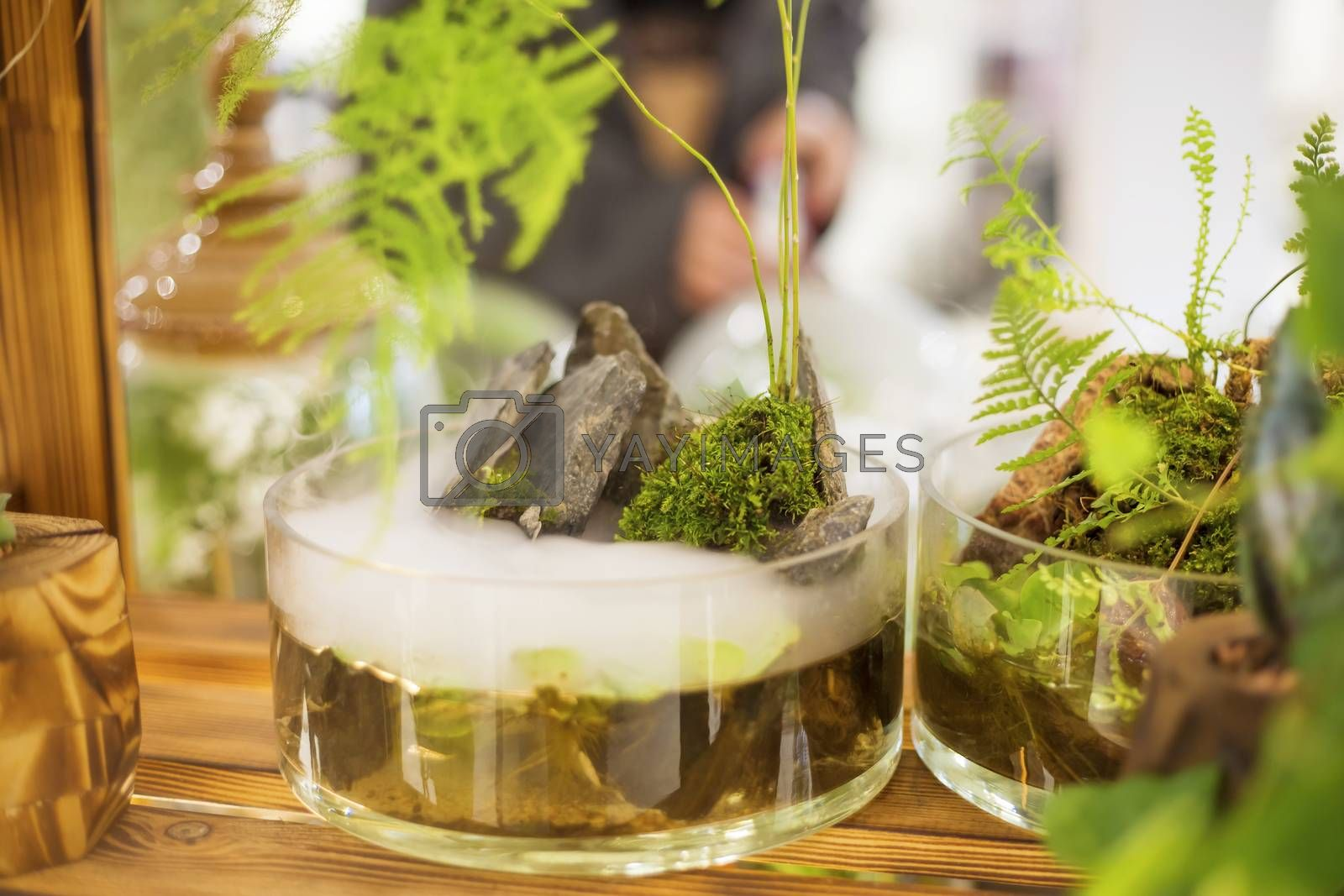 Floristic composition in a transparent glass bowl Glass terrarium with natural stones and green moss in a soft selective focus.