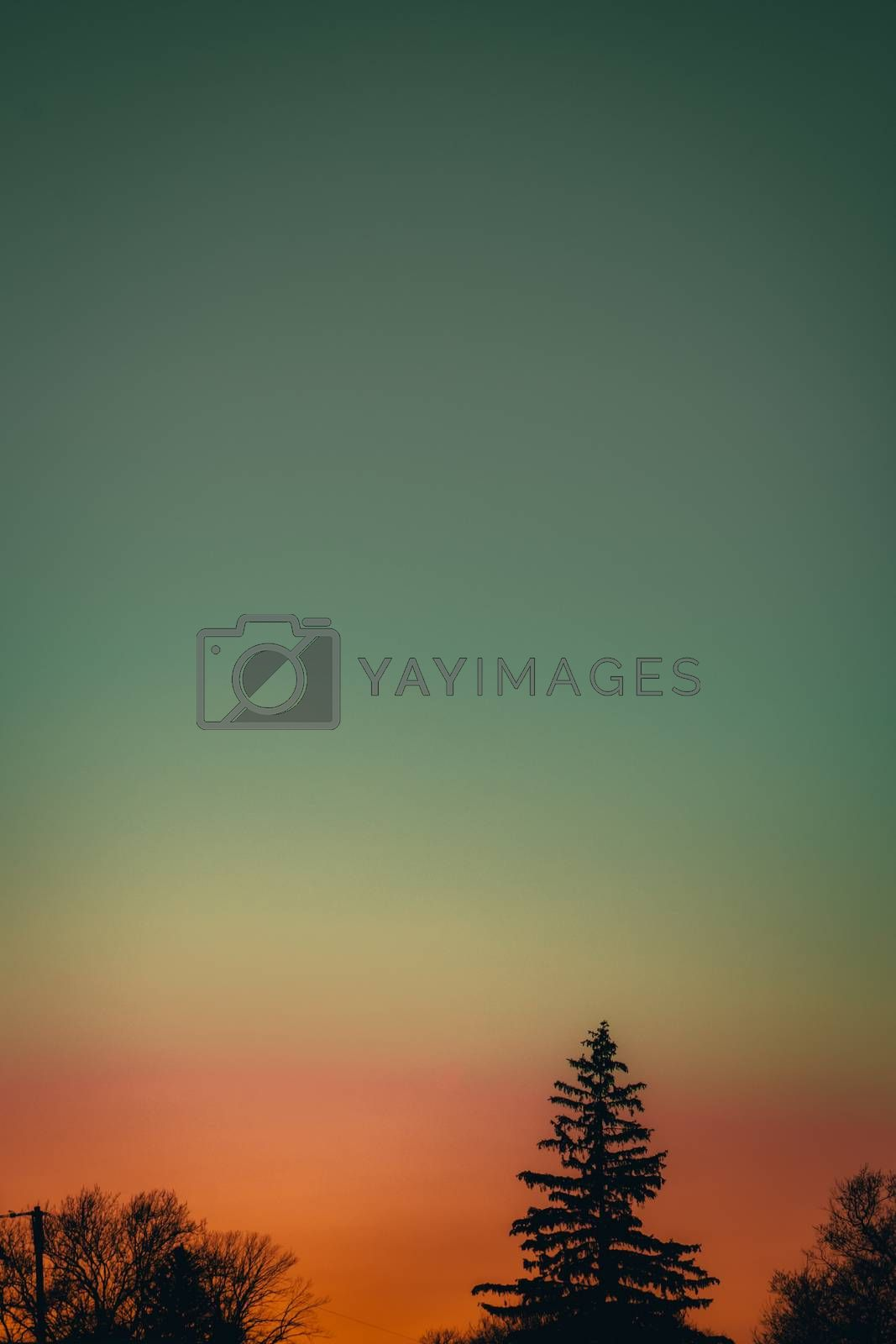 A Dramatic and Clear Orange and Blue Sky With Silhouetted Trees at the Bottom of the Frame
