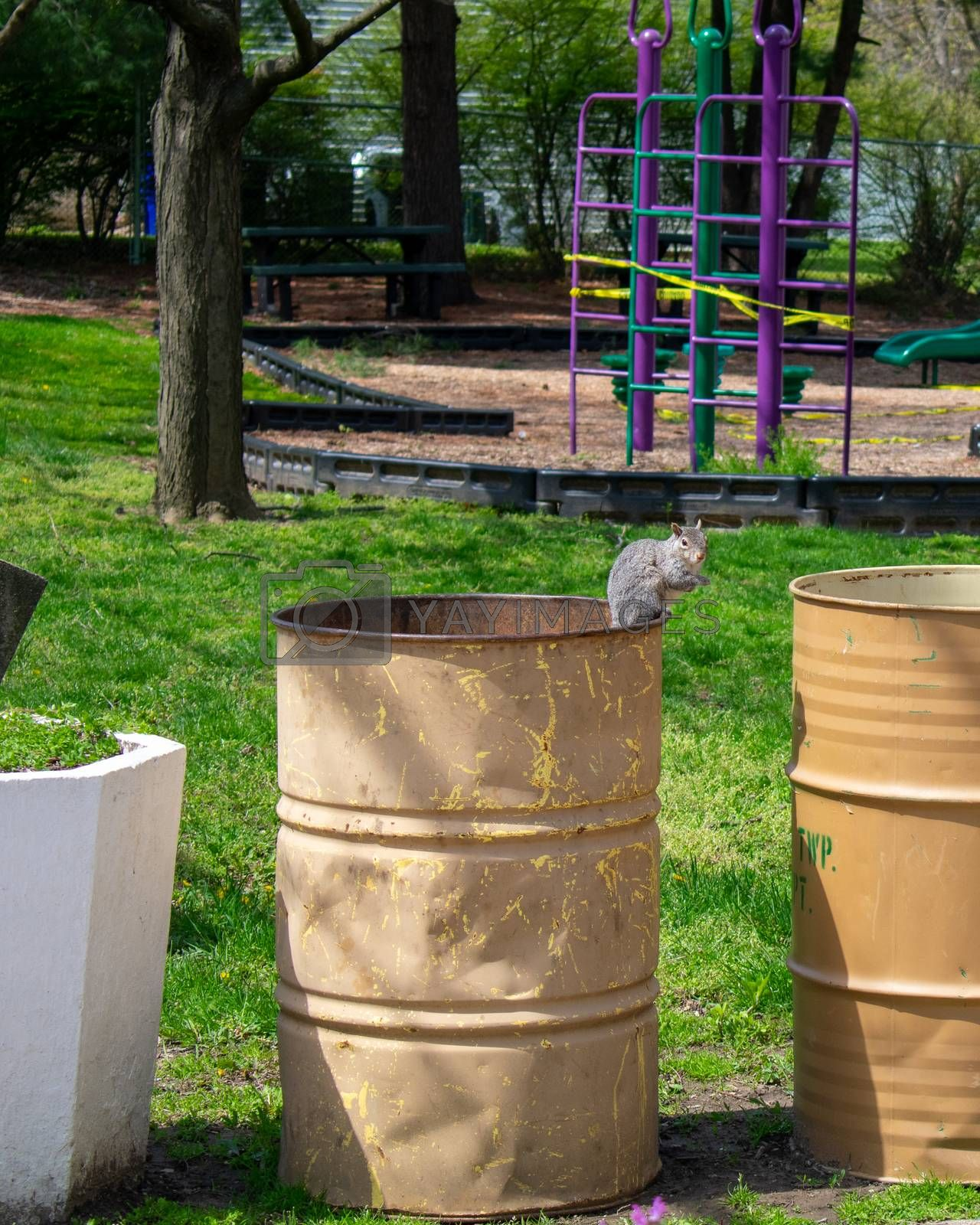 A Small Squirrel Sitting on a Metal Trash Can at a Park