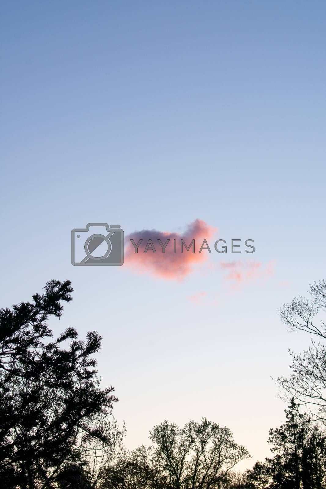 A Heart Shaped Pink Cloud on a Clear Blue Sky With Trees Around the Frame