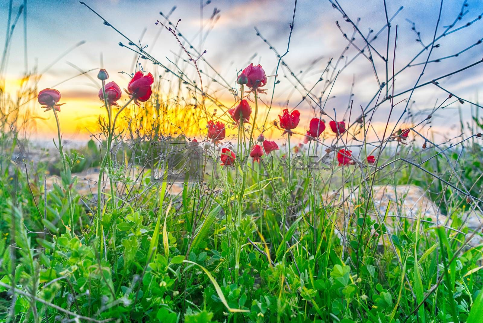 Red Flowers and green grass in ecology walk for nature