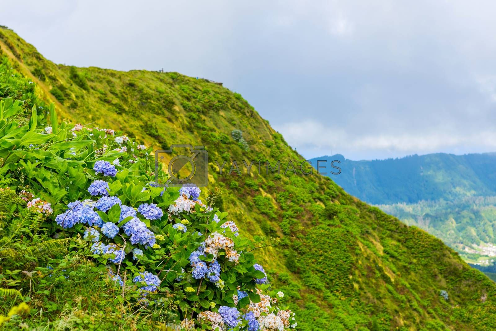 Royalty free image of wild flowers in the mountain by zittto