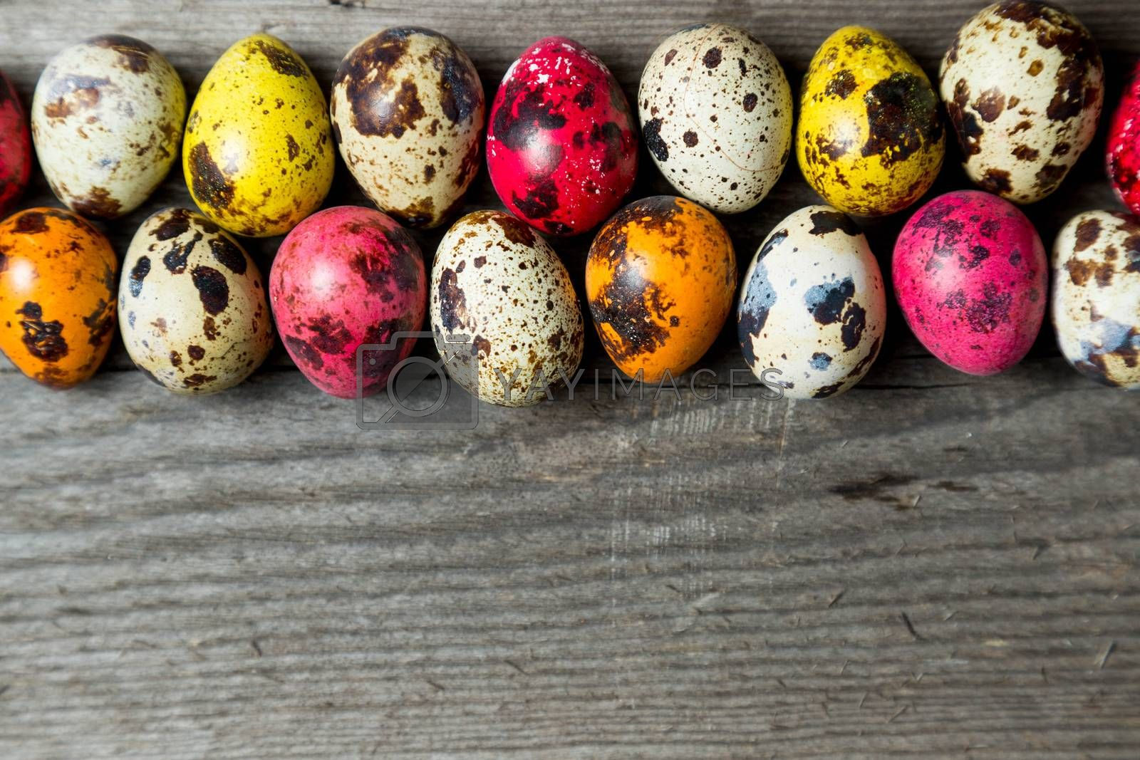 Multi-color dyed easter eggs arranged in a row on wooden background. Easter background with space for a text.