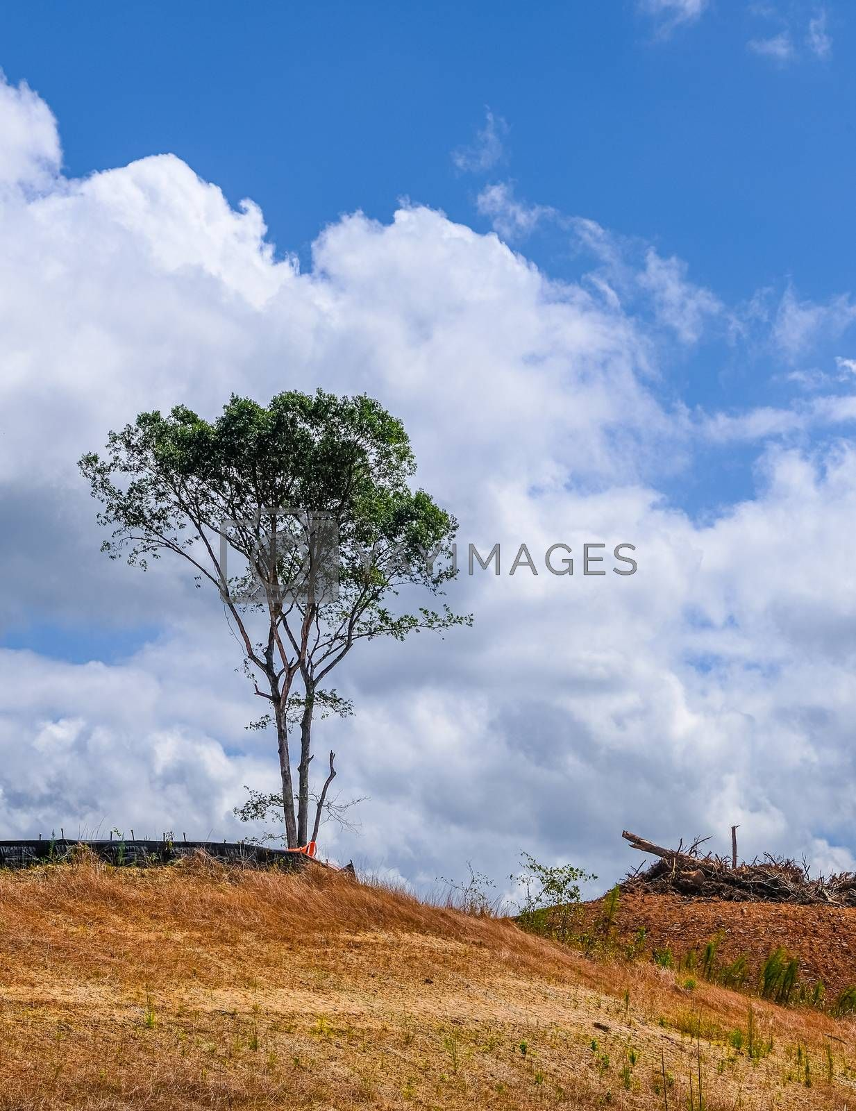 Lone Tree on a Construction Site on a Bare Stripped Dirt Hill