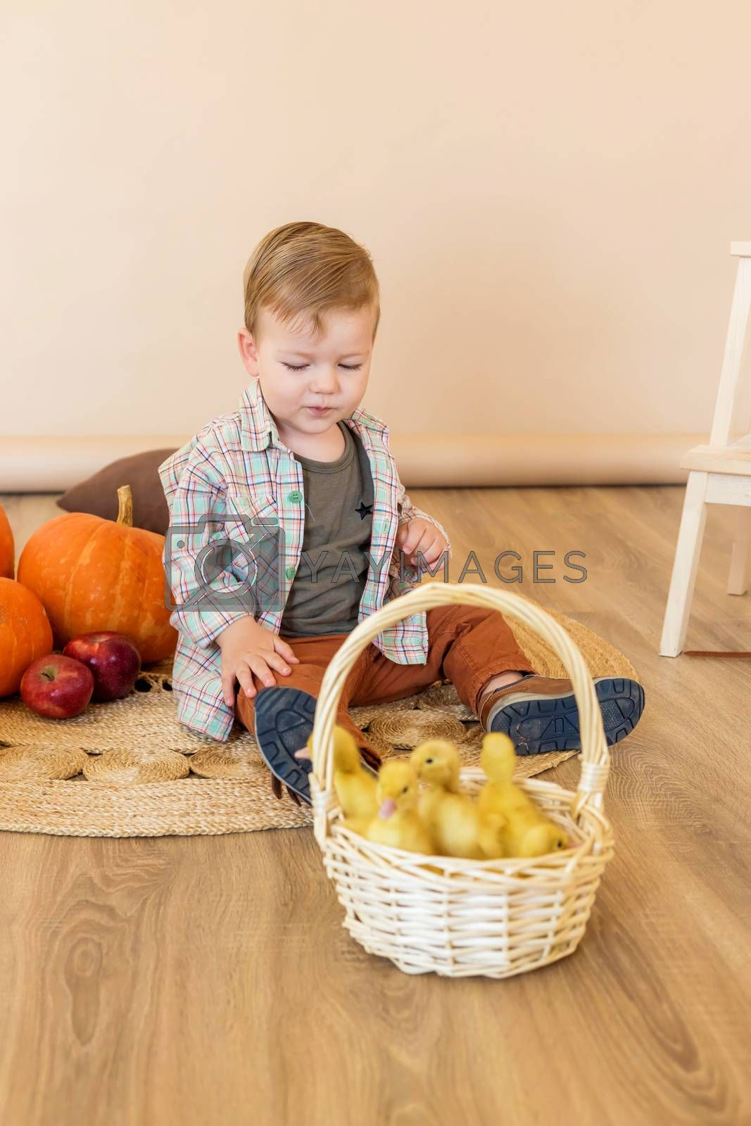 A little boy sits among pumpkins with a basket of ducklings.