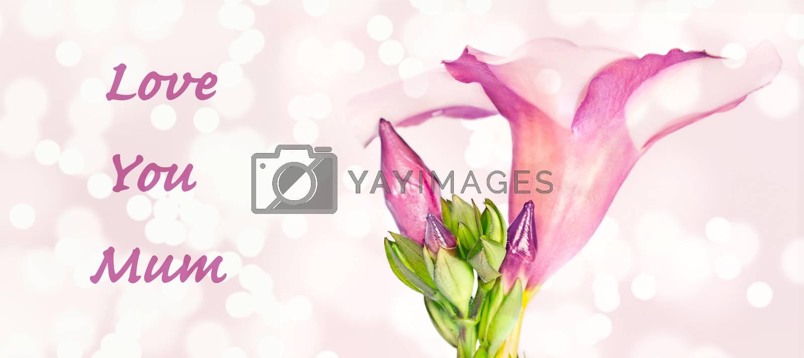 Pink flower stylish love you mum greeting card