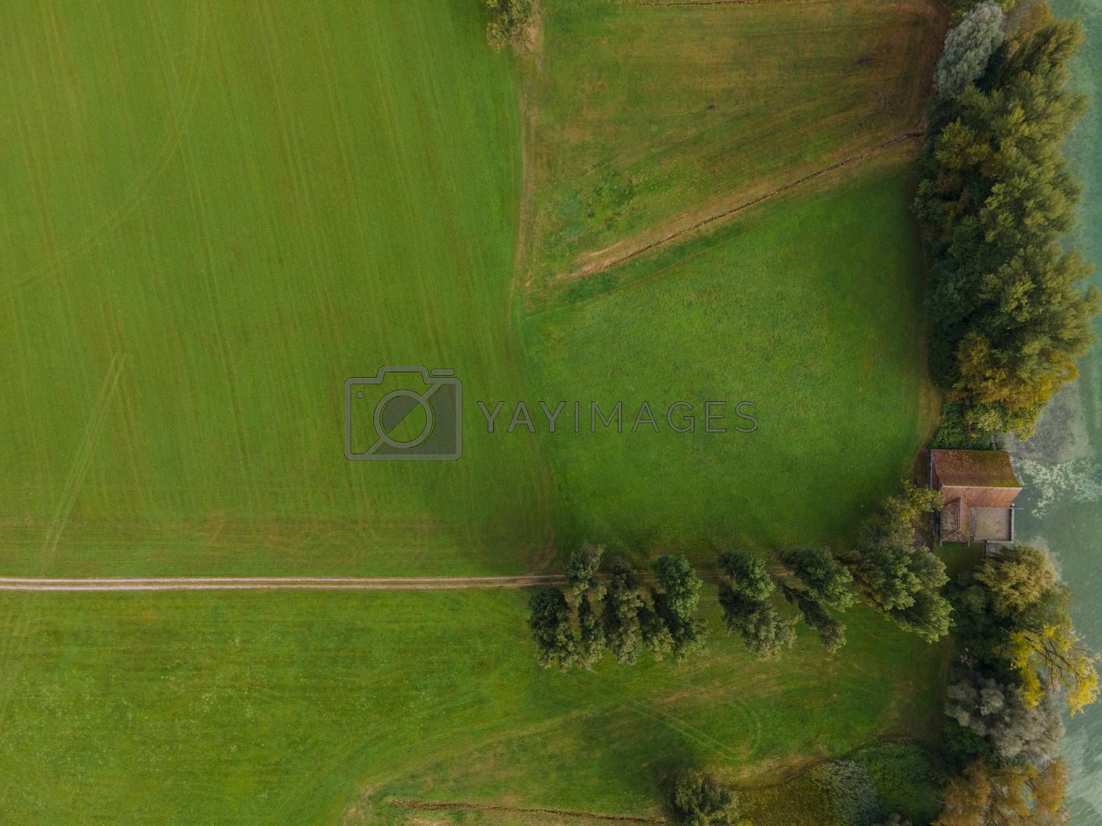 Drone shot of pasture near a lake. Copy space