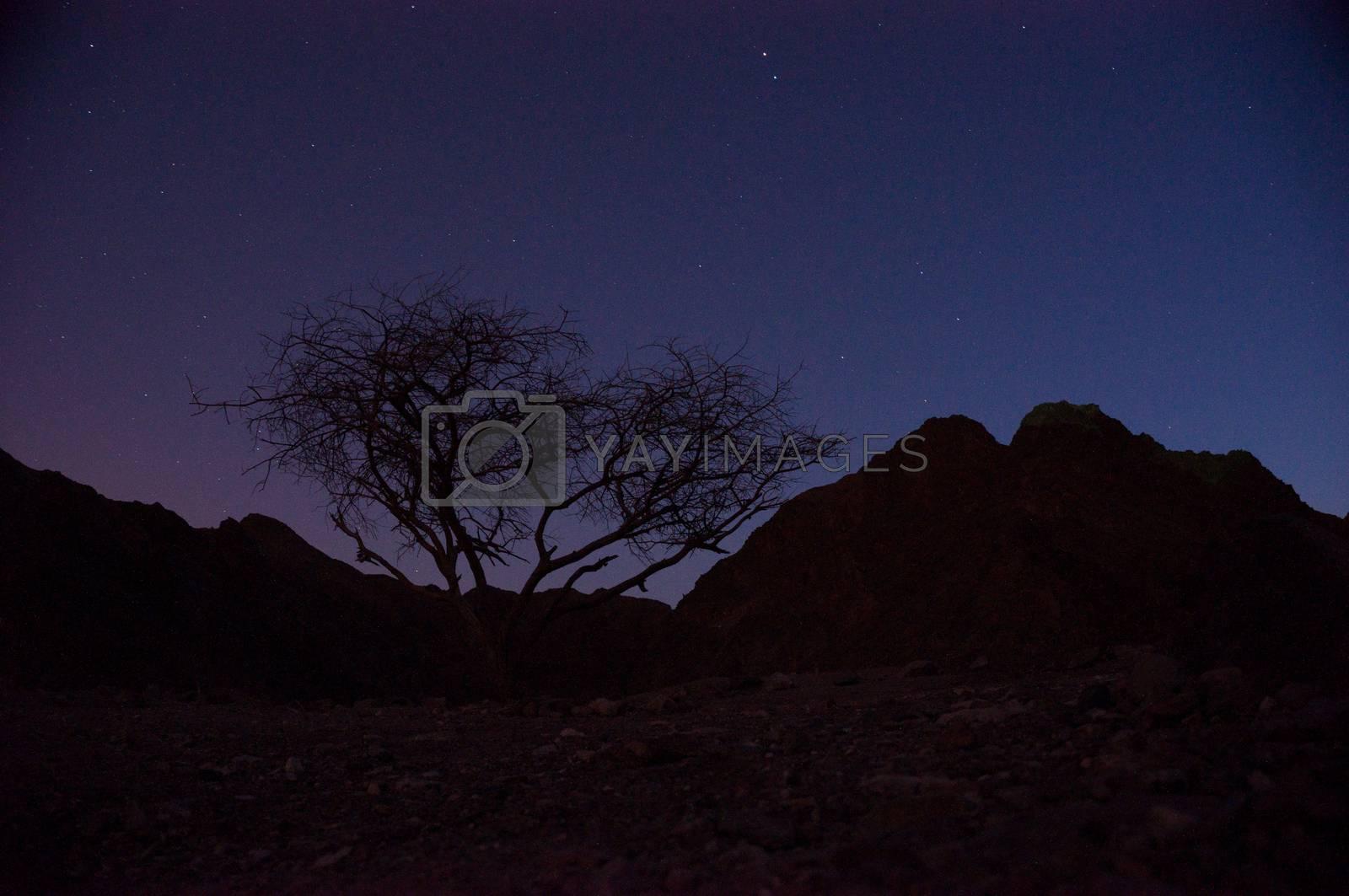 Night desert in Israel by javax