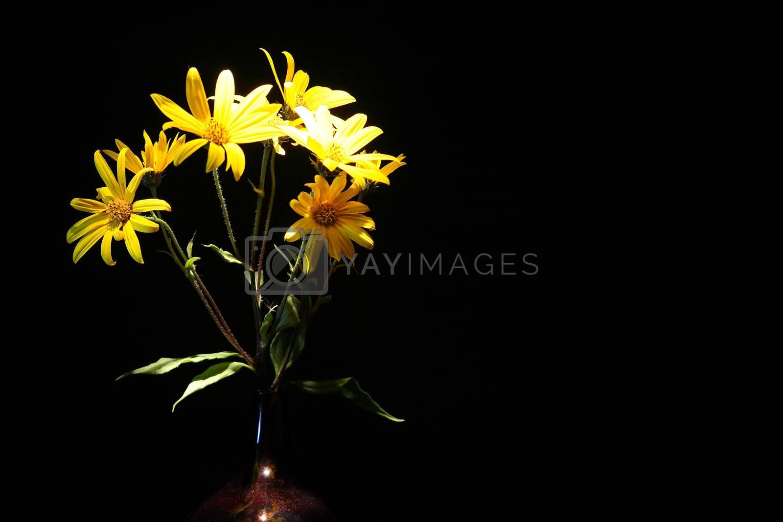 Royalty free image of Yellow On Black by kvkirillov