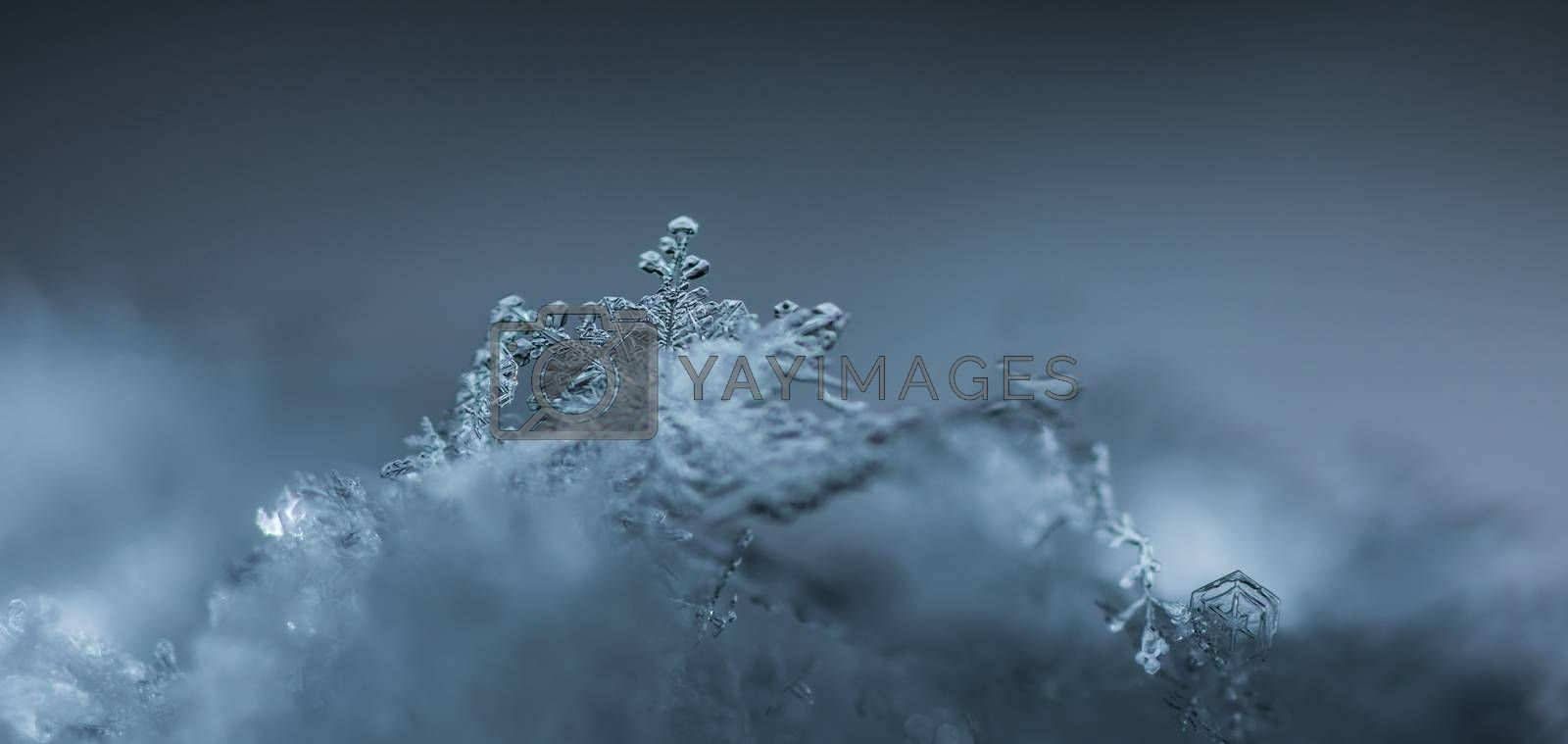 versatile snow crystal on gray panorama view