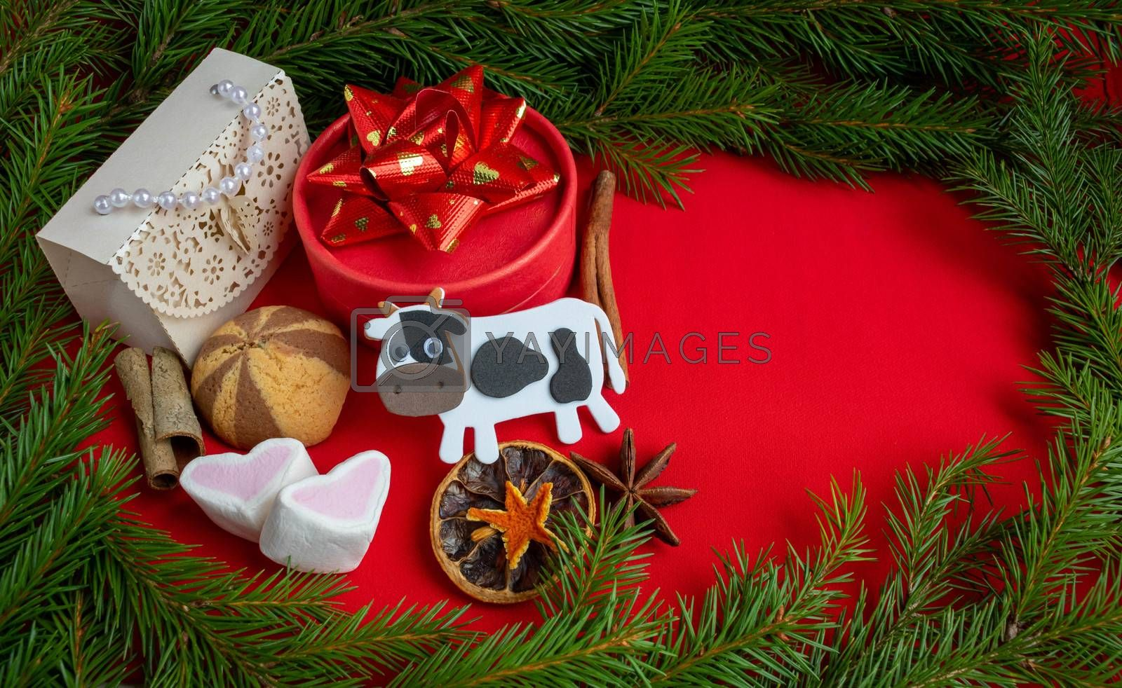 The 2021 symbol of the year is a white bull and Christmas gifts lie against a spruce branch on a red background. Copy of space, banner.