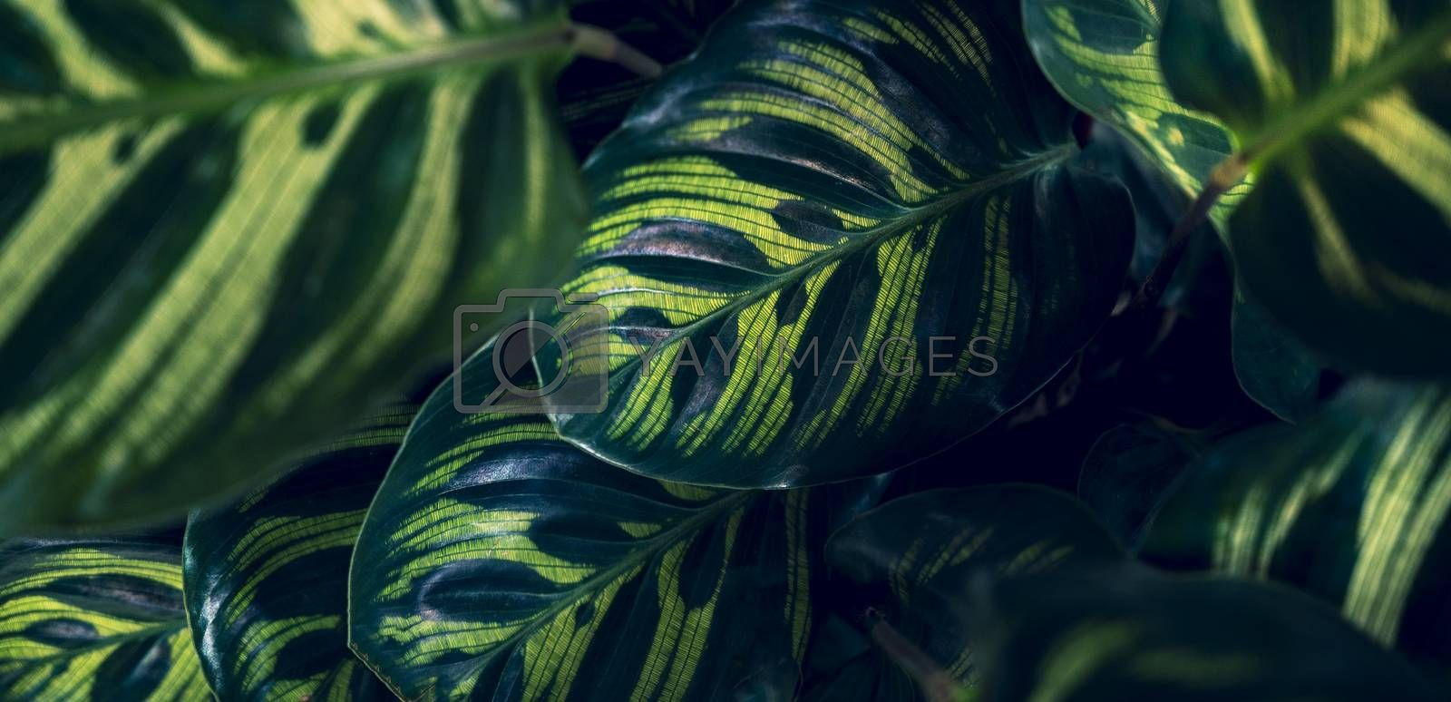 tropical leaves colorful flower on dark tropical foliage nature background dark green foliage nature