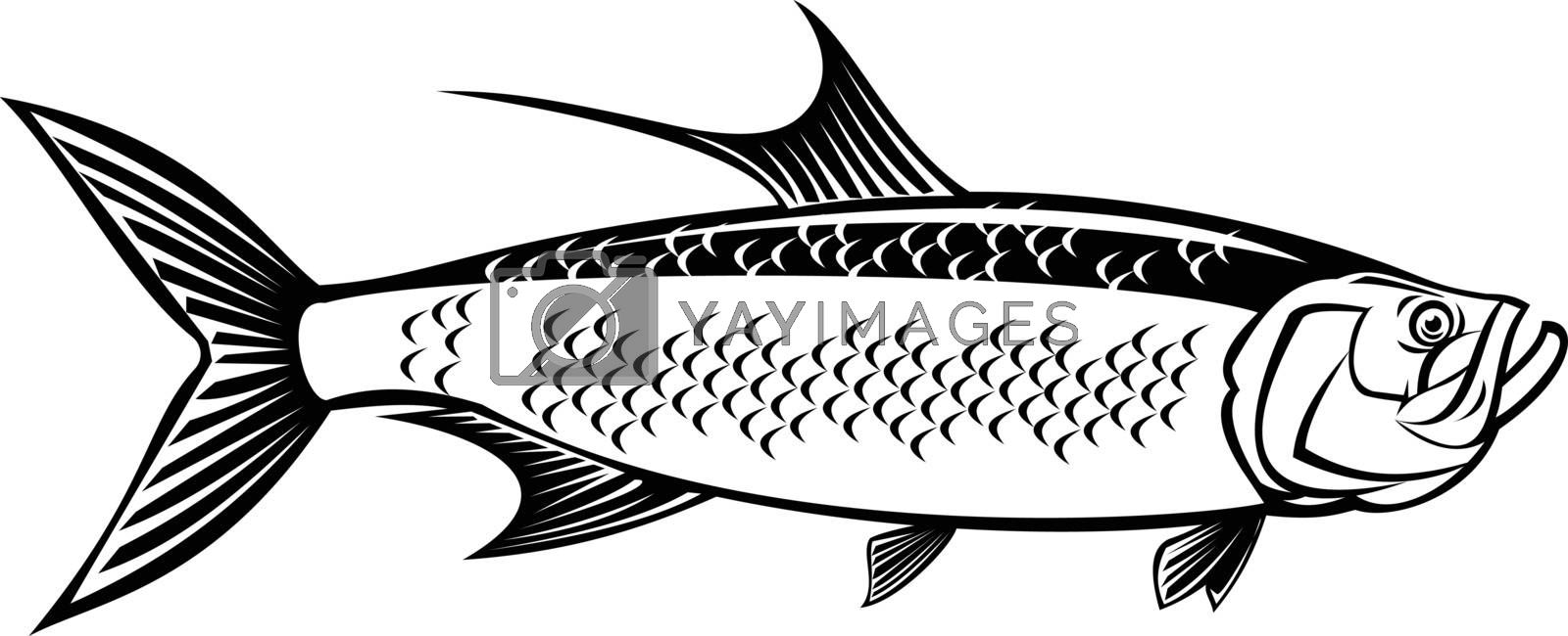 Retro style illustration of an Atlantic tarpon, Megalops atlanticus, Tarpon atlanticus silver king, grand Ecaille or sabalo real, viewed from side on isolated background done in black and white.