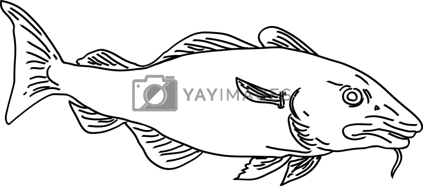 Line Art style illustration of an Atlantic cod Gadus morhua, a benthopelagic fish of the family Gadidae commercially known as cod or codling viewed from side on isolated background in black and white.