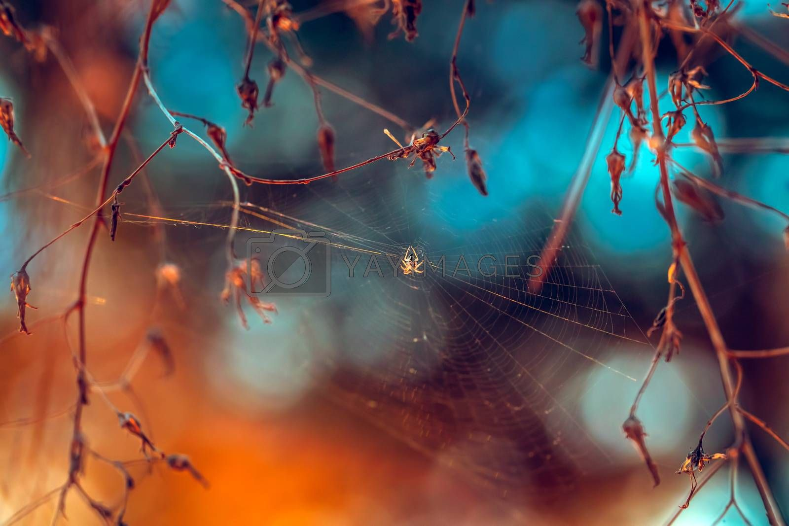 Royalty free image of Spider Web in the Forest by Anna_Omelchenko