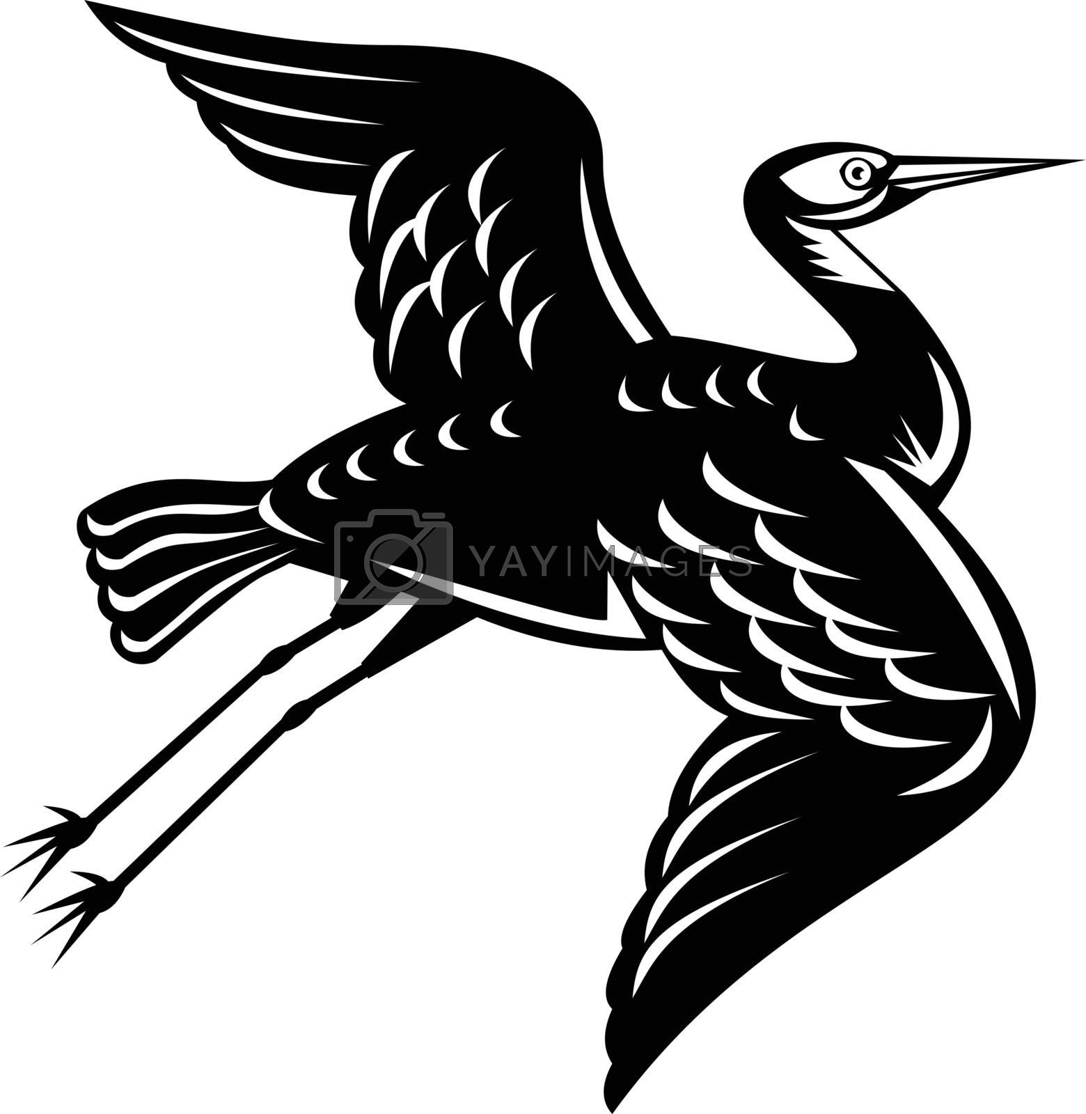 Retro woodcut style illustration of a white-faced heron Egretta novaehollandiae, white-fronted heron, grey heron or blue crane, a common bird in Australasia on isolated background in black and white.