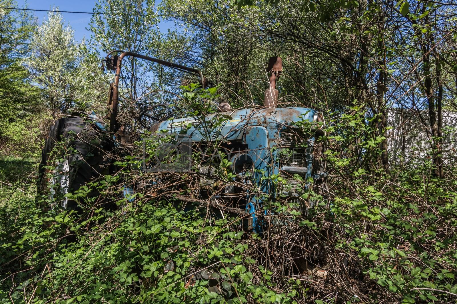 overgrown blue tractor in nature at a farm