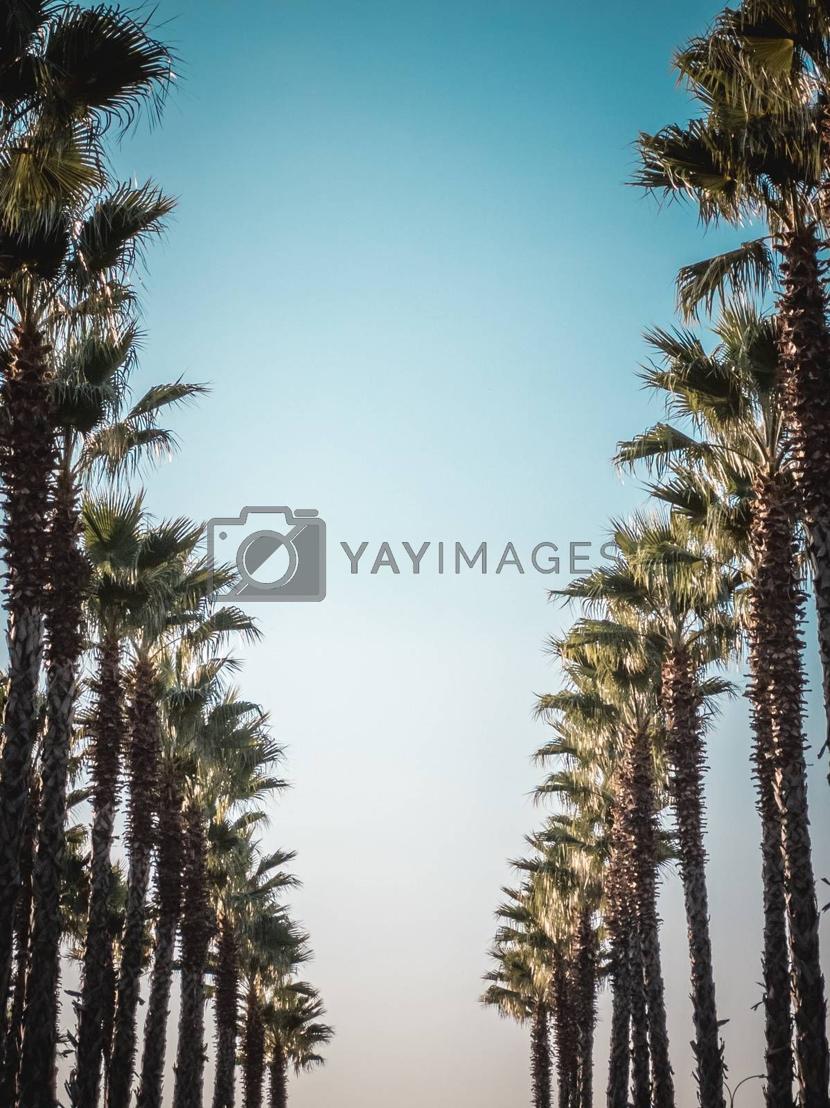 Palms frame in vintage retro toned with copy space in center. Beautiful pattern of palm trees on street with amazing blue sky