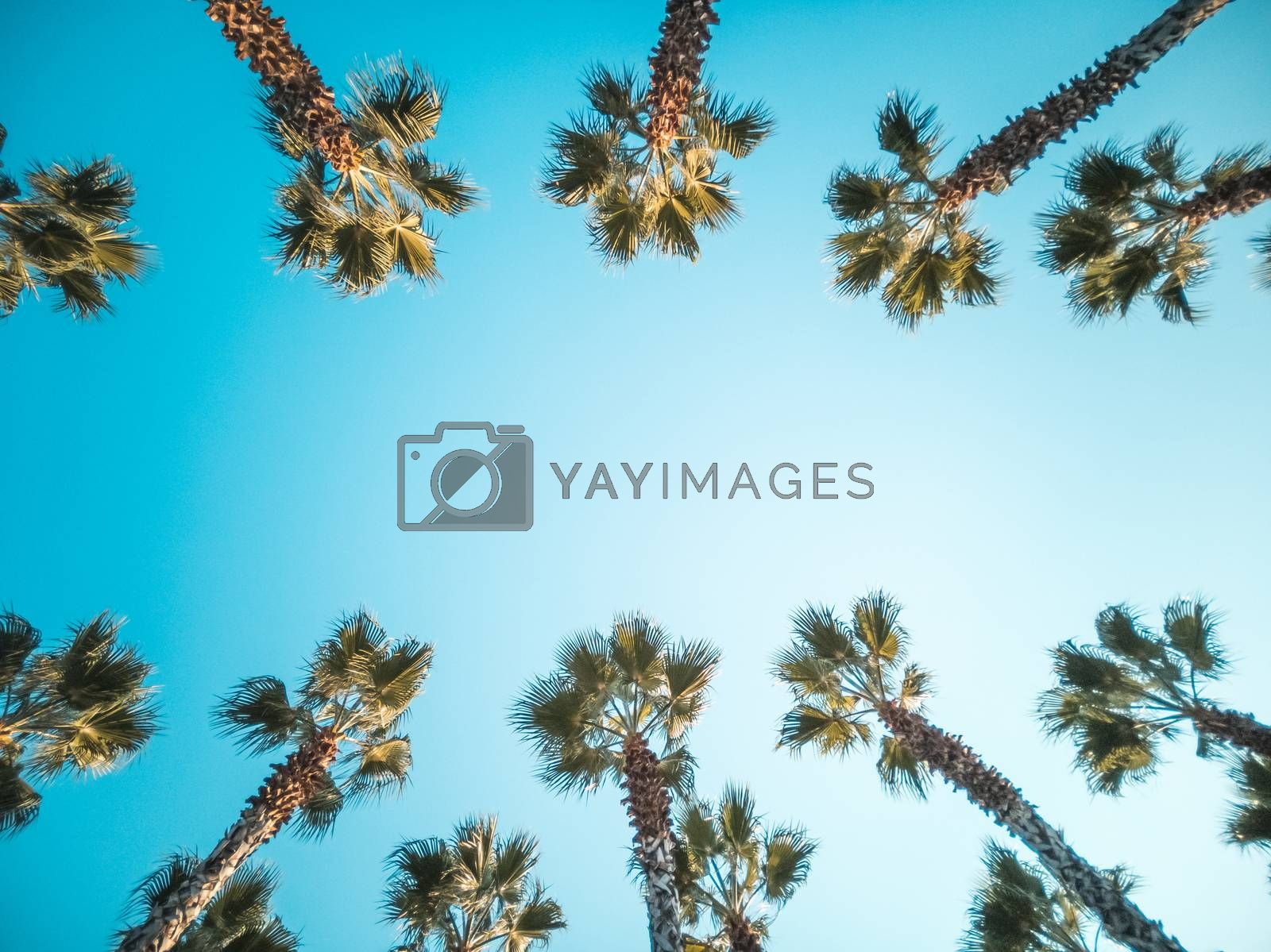 Palms frame in vintage retro toned with copy space in center. Beautiful pattern of palm trees on street with amazing blue sky. Bottom-up view