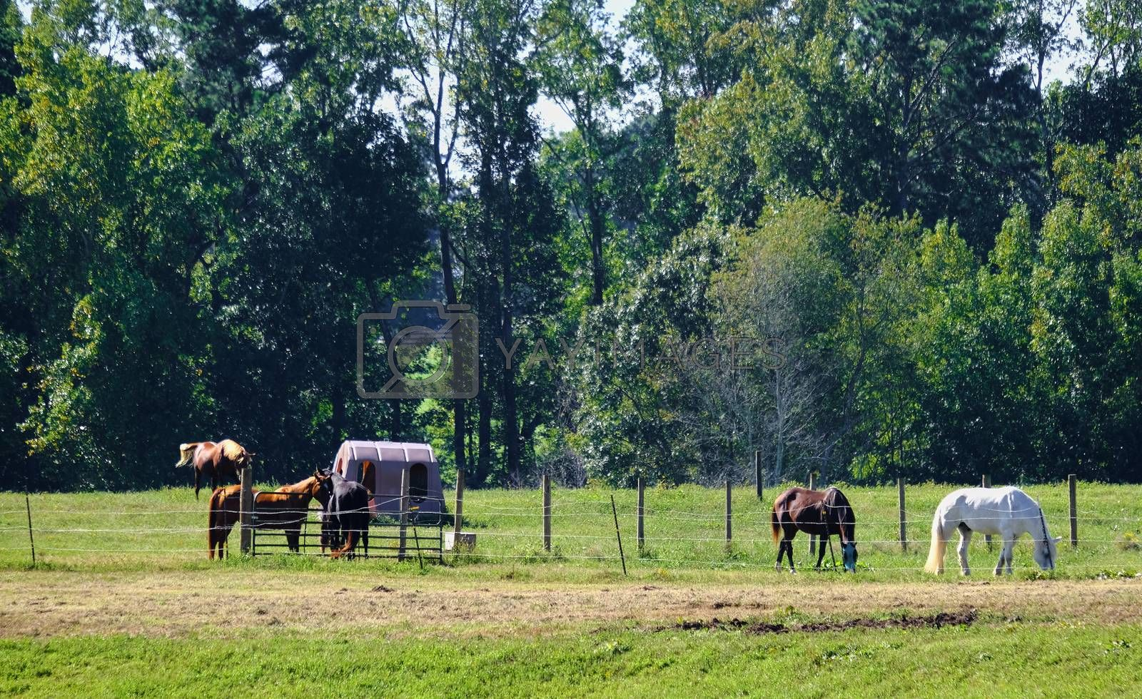 Horses Behind Fence in Summer