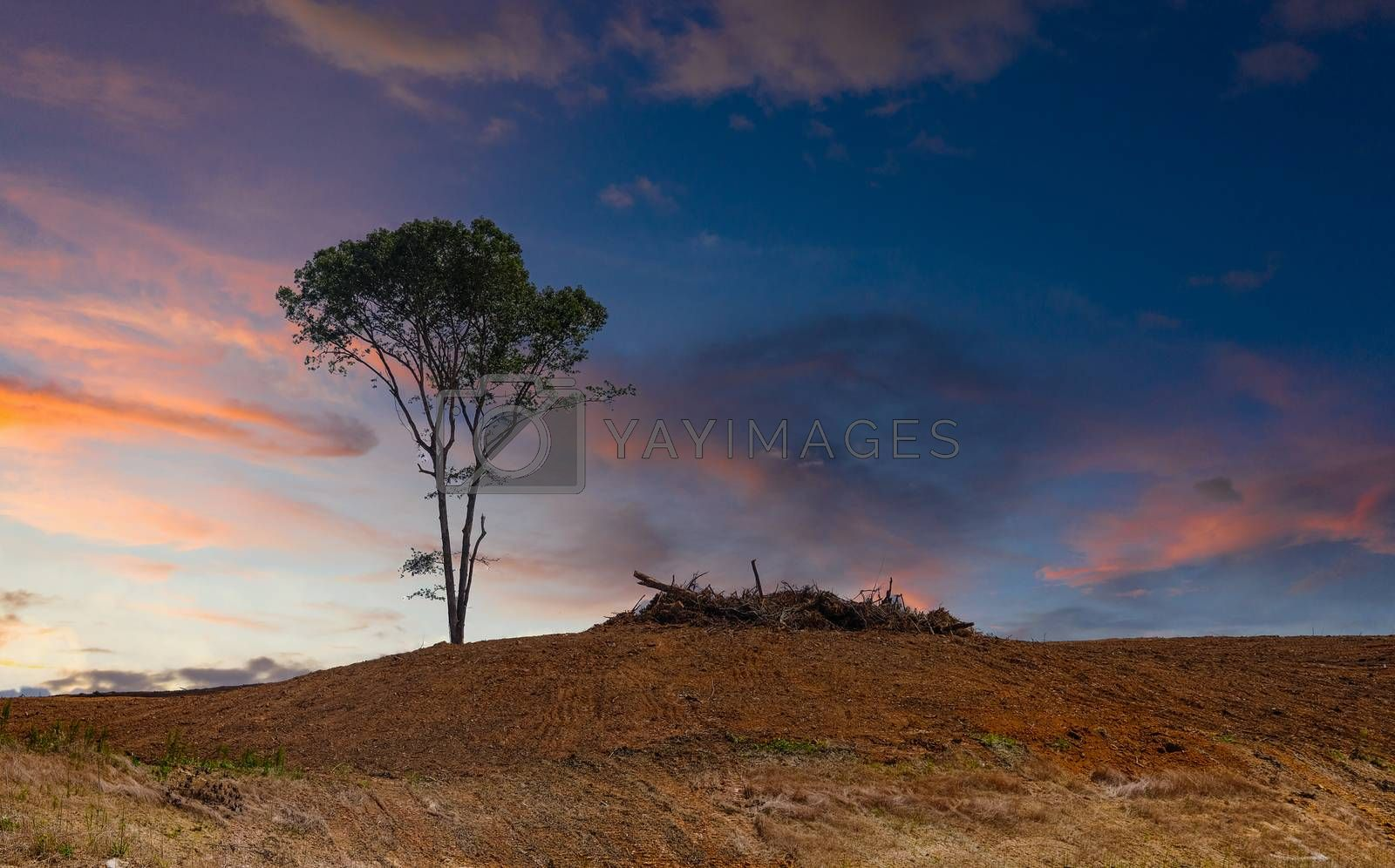 Lone Tree on a Bare Hill at a Construction Site at Dusk