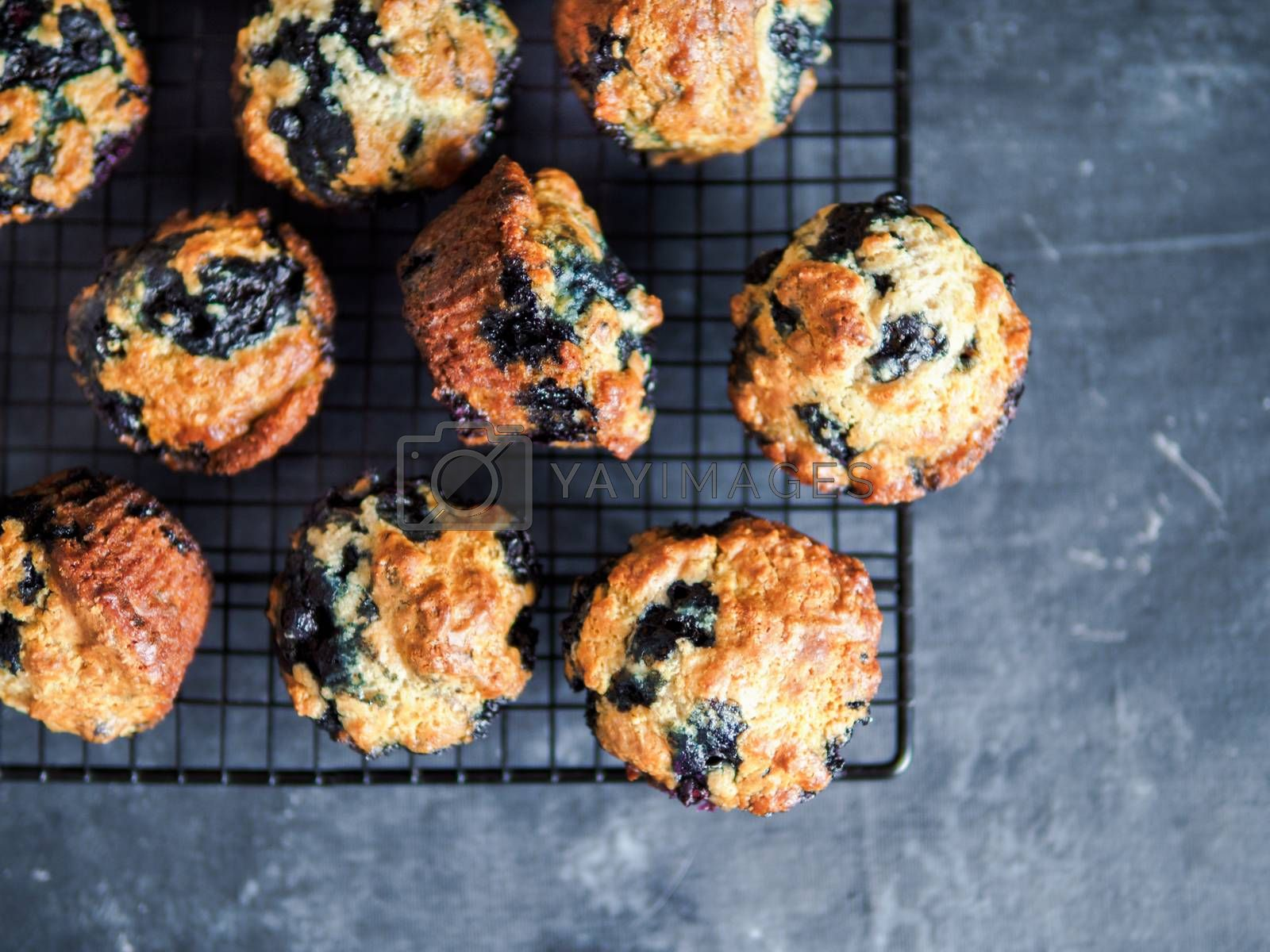 Homemade vegan blueberry muffins on cooling rack. Vegetarian egg-free muffins on dark background. Top view or flat lay. Copy space for text or design.