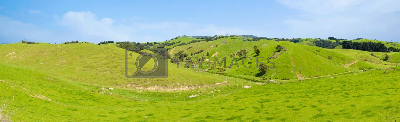 Common view in the New Zealand - hills covered by green grass. Panoramic photo