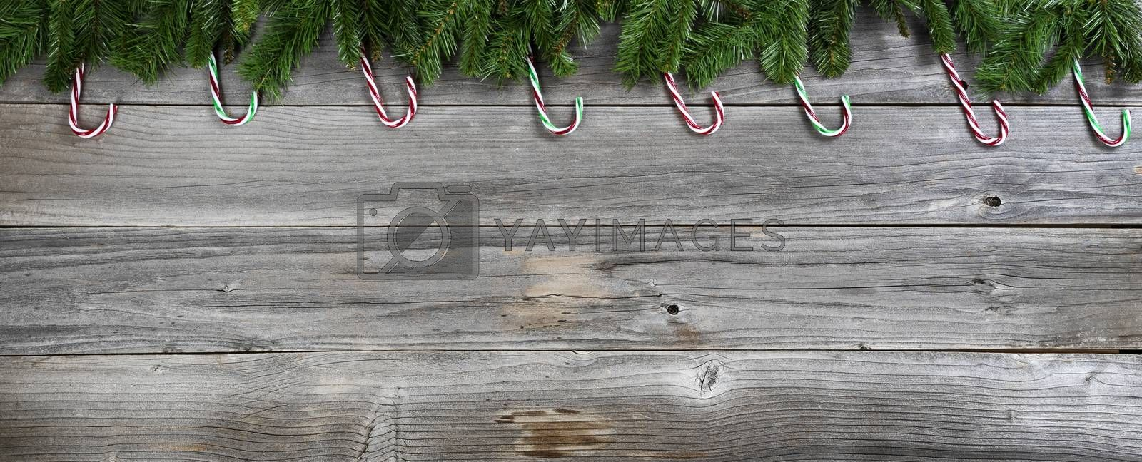 Merry Christmas and Happy New Year with fir branches and candy canes on rustic wooden boards