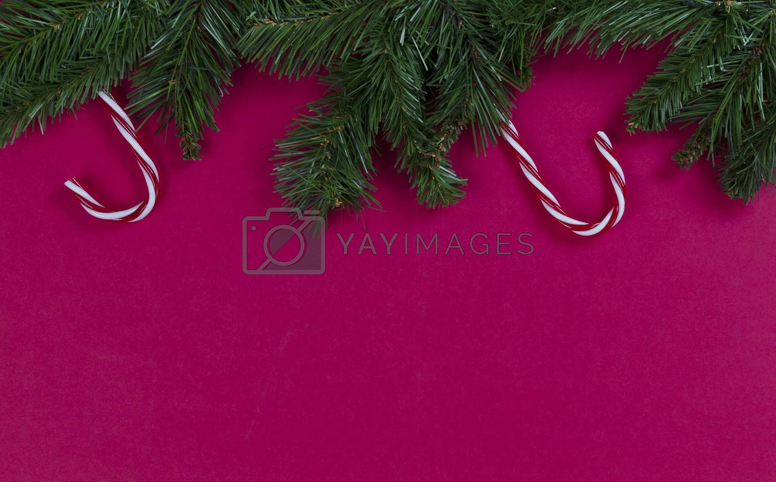 Merry Christmas and happy New Year on a red background with evergreen branches and candy canes plus plenty of copy space