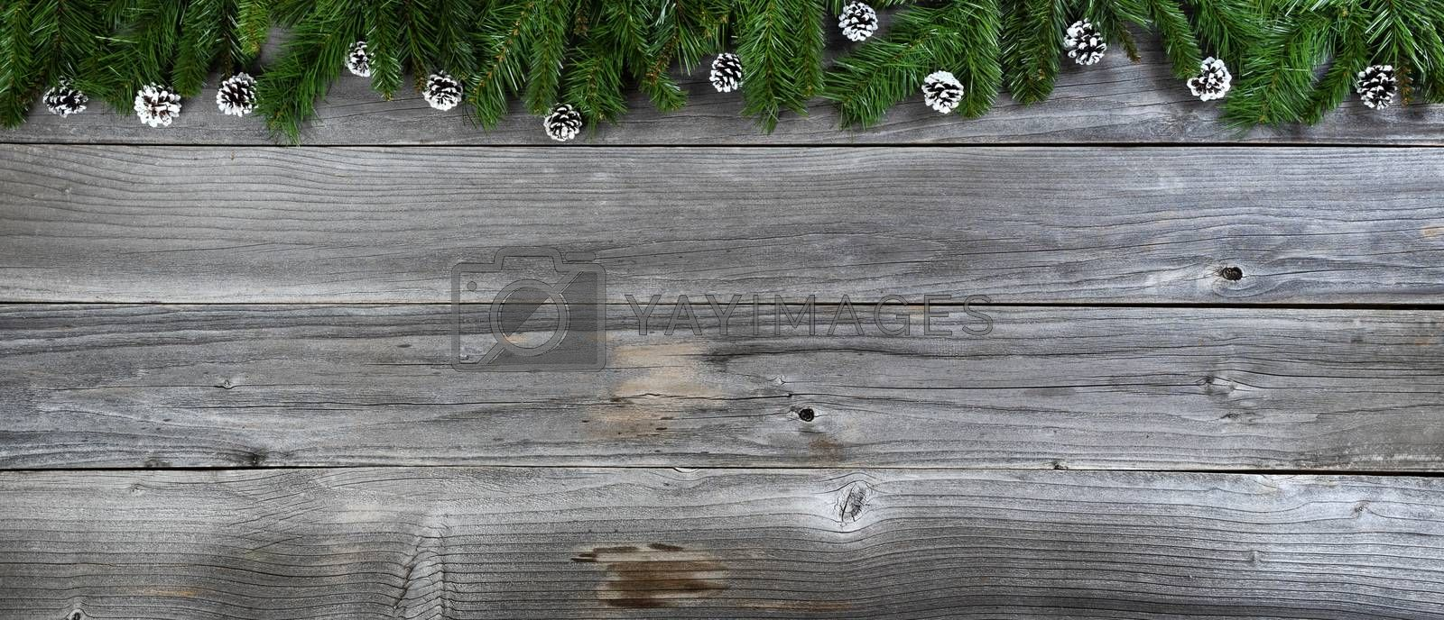 Merry Christmas and Happy New Year concept with pine cone ornaments inside of fir branches on rustic wooden boards