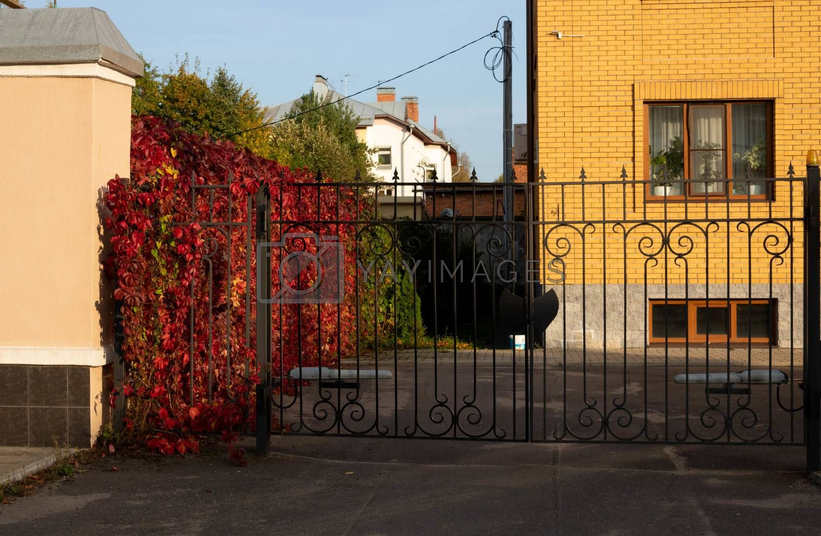 Royalty free image of New forged metal double gates for entry of cars into the yard closed by lapushka62