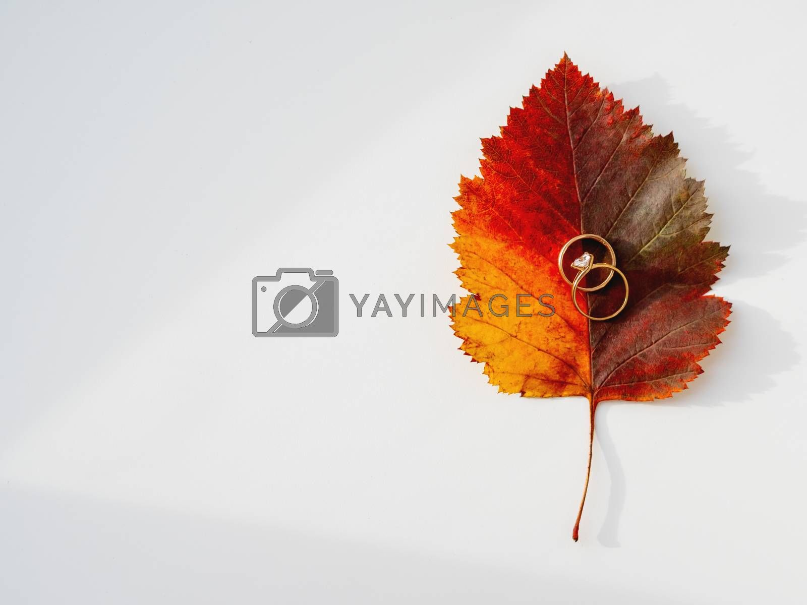 Golden wedding rings on bright and colorful autumn leaf. Top view on monochrome geometry with light and shadow. Minimalism. Fall season.