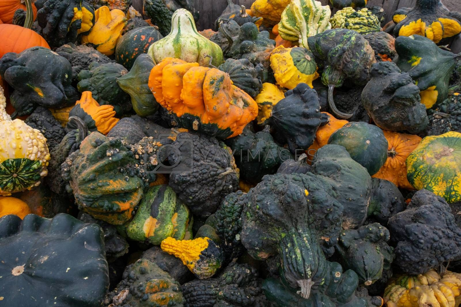 A Pile of Ugly Pumpkins and Squash in Different Colors in a Wooden Crate in a Farmer's Market Filling the Frame