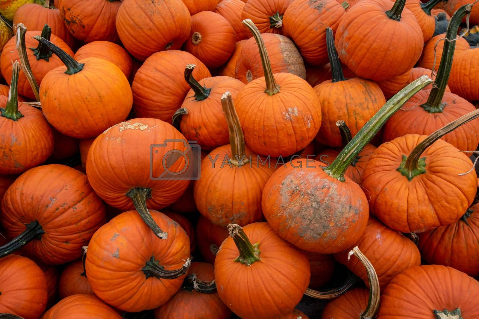 A Pile of Medium-Sized Orange Pumpkins in a Wooden Crate at a Farmer's Market Filling the frame