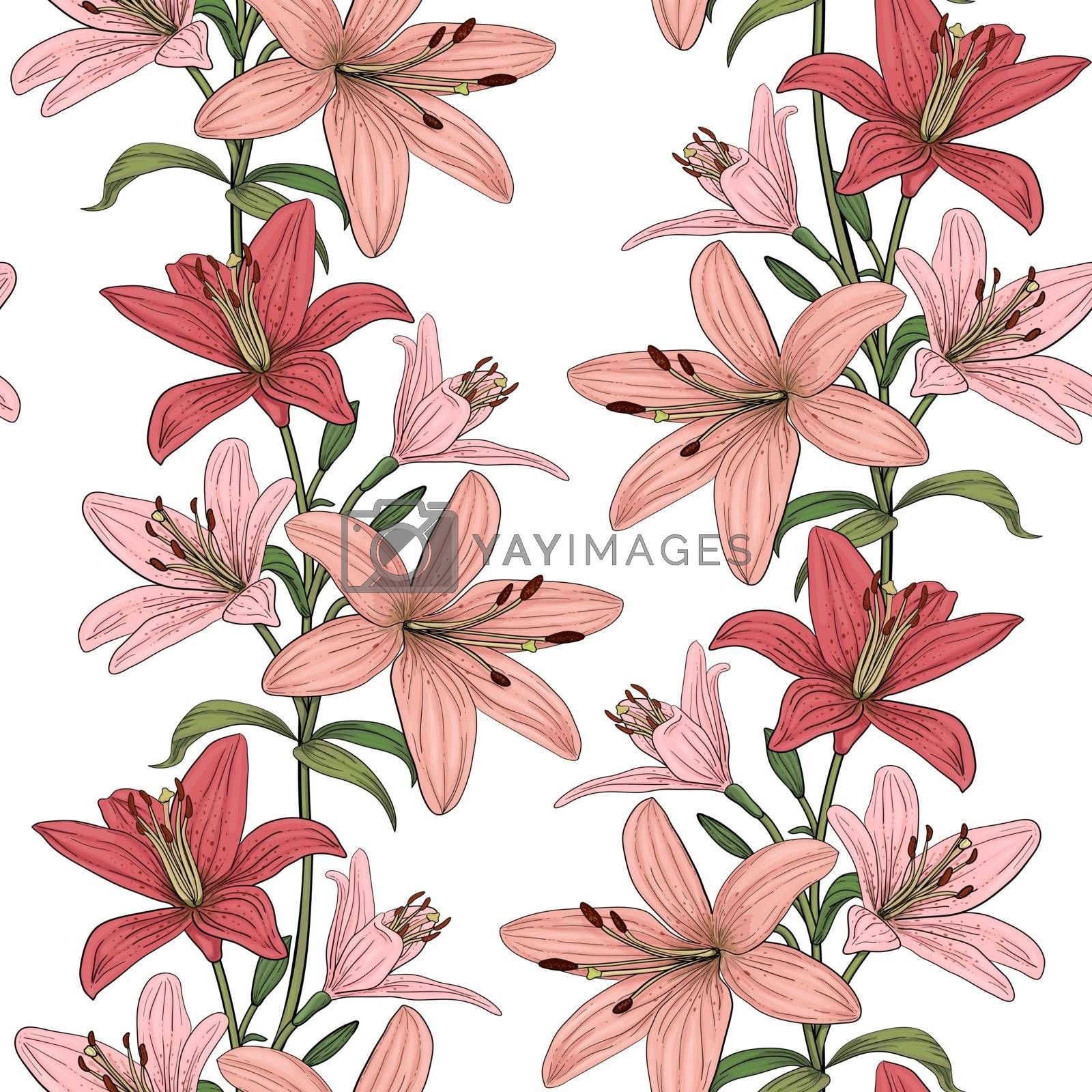 Seamless vector pattern with colorful lilies flower pink and red lily on white background. Blooming floral background for wedding invitations and greeting cards. Flower of Lilium candidum Madonna lily