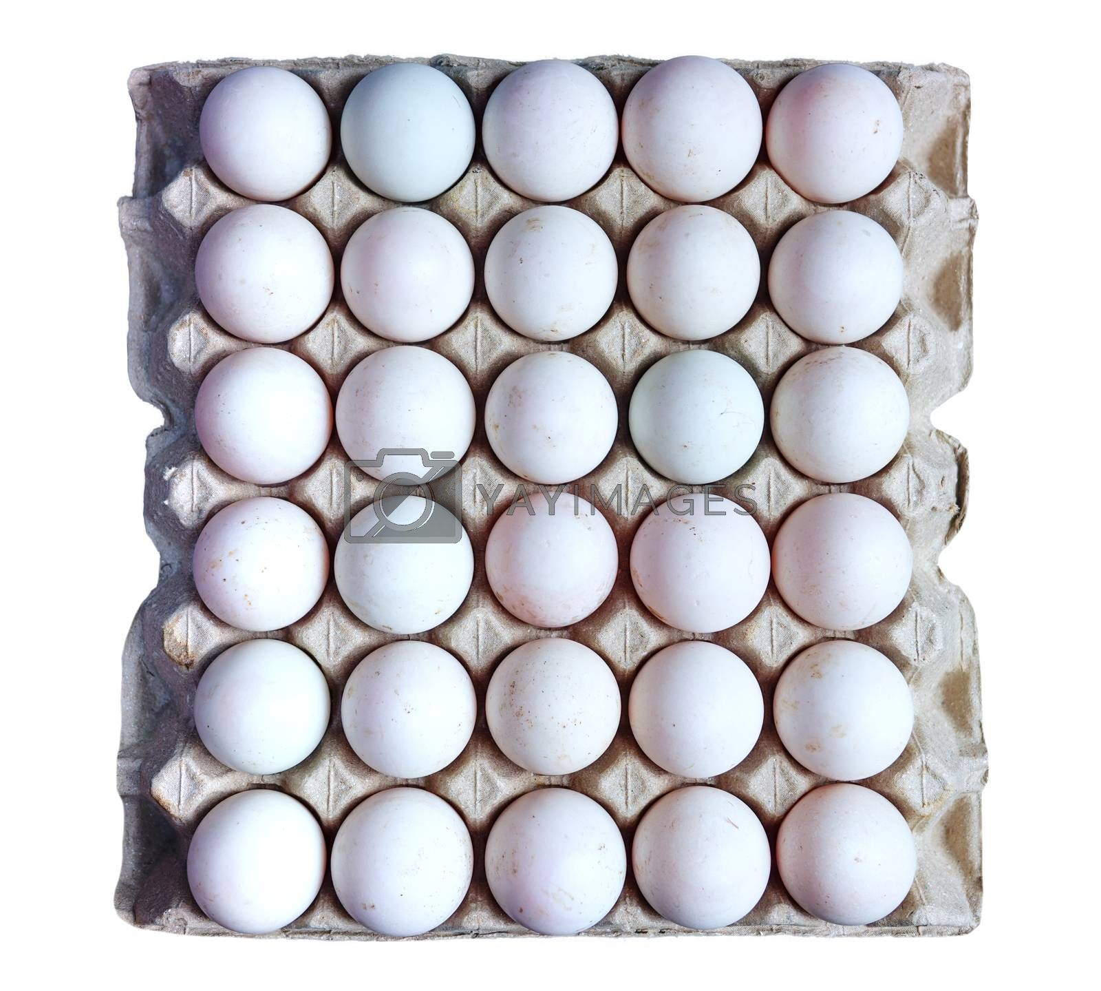 Fresh duck eggs collected from the farm are placed in a container of 30 eggs on a separate white background.