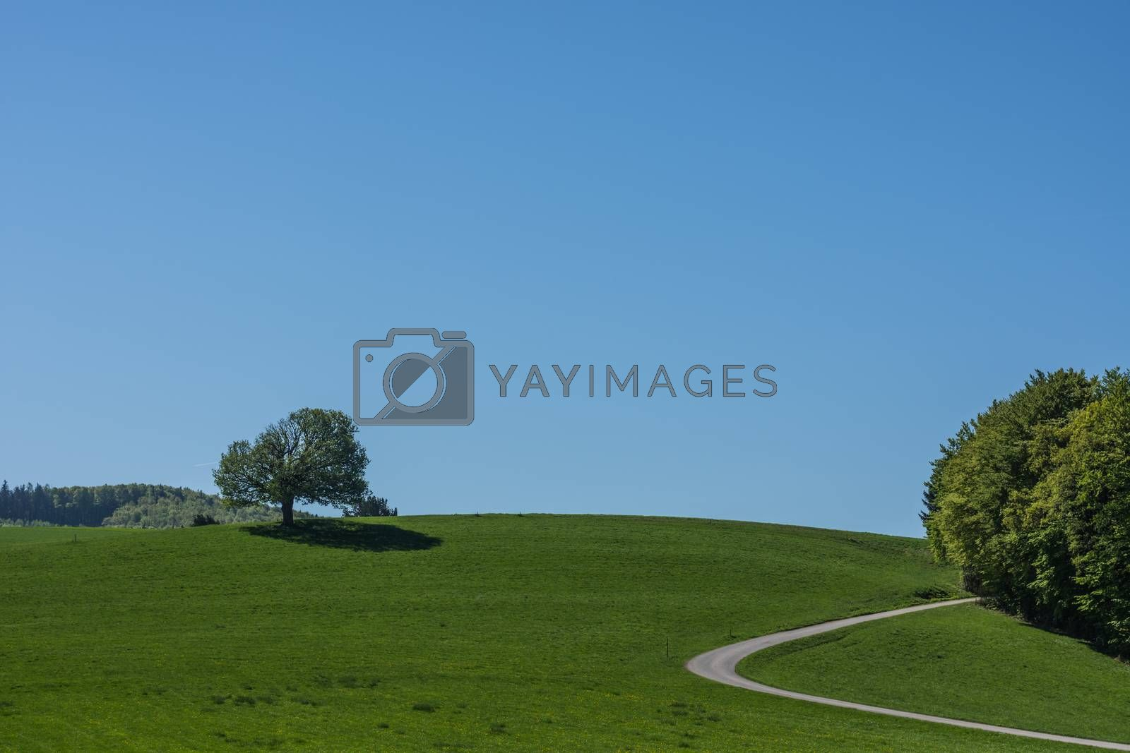 Green mountain landscape with blue sky in spring