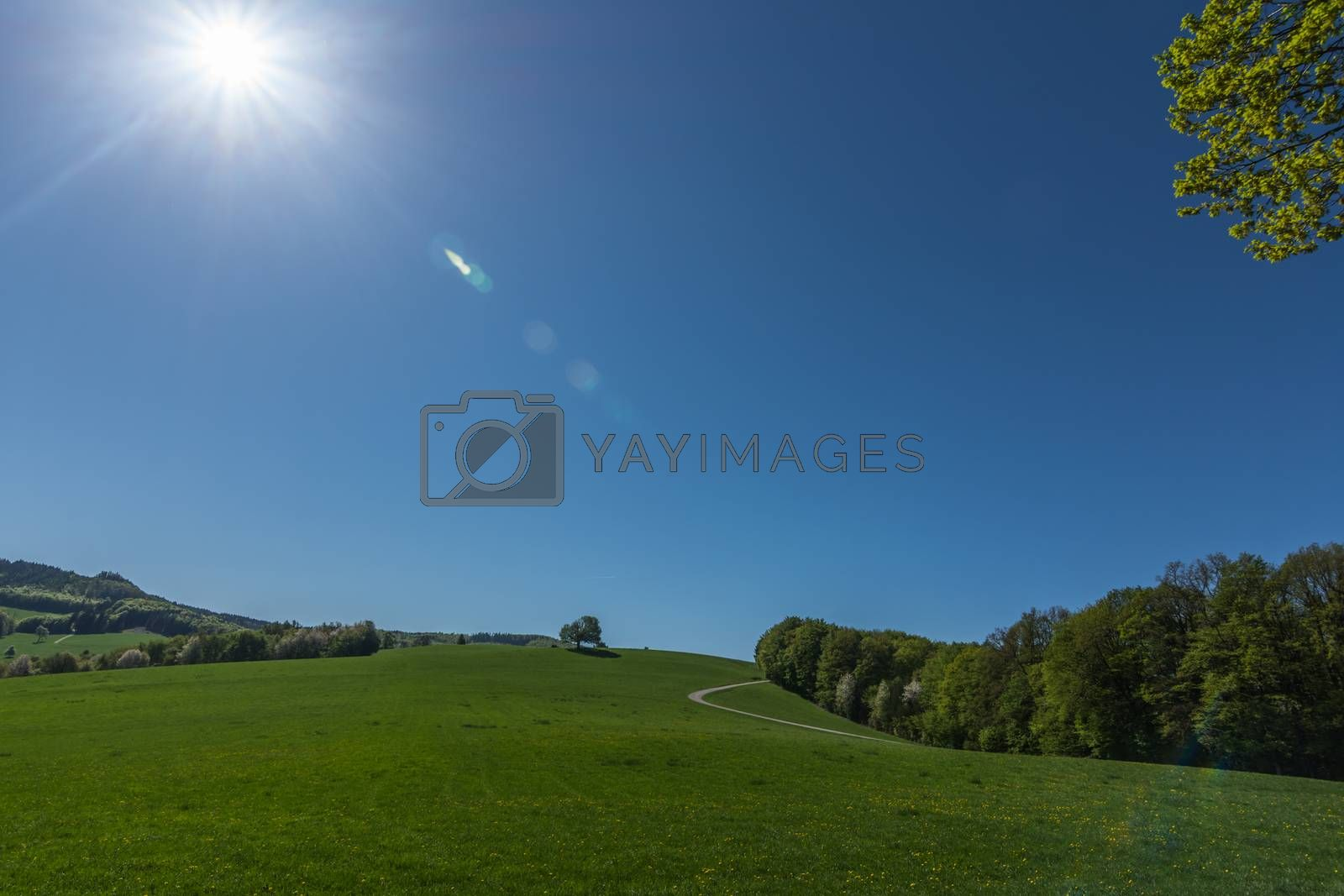 Green natural landscape with sun in the blue sky