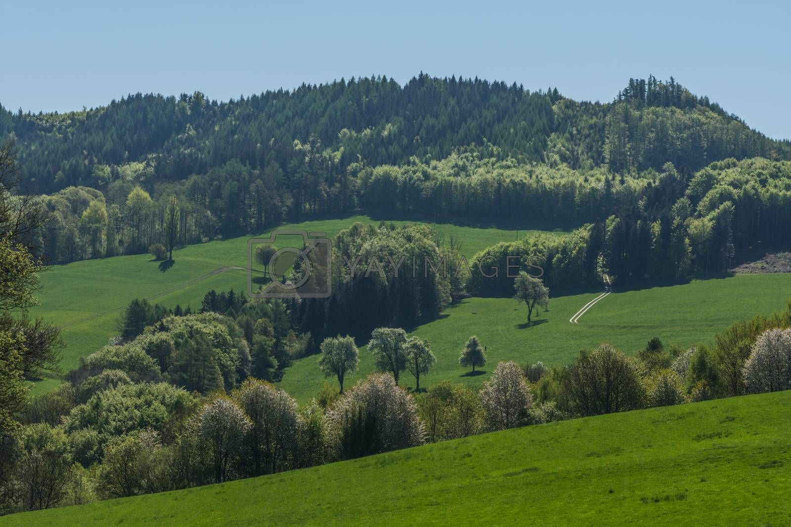 fresh green trees and meadows in spring