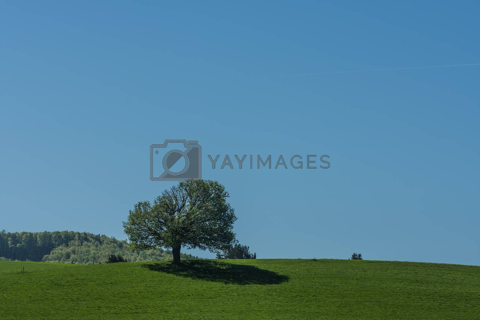 Mountain with shadow and green meadow in spring