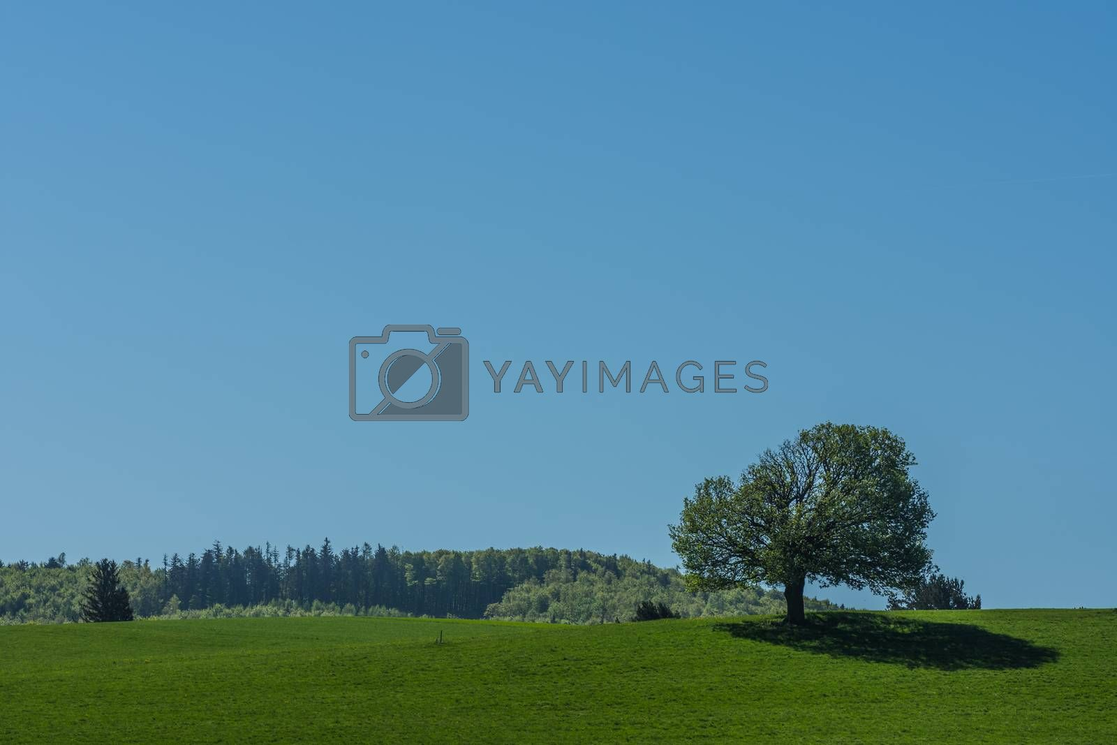 Tree with shadow and blue sky in spring