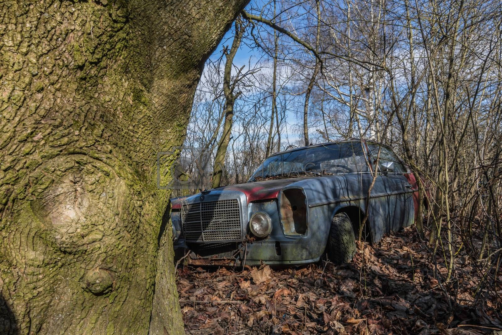 Tree and old Mercedes on an abandoned property