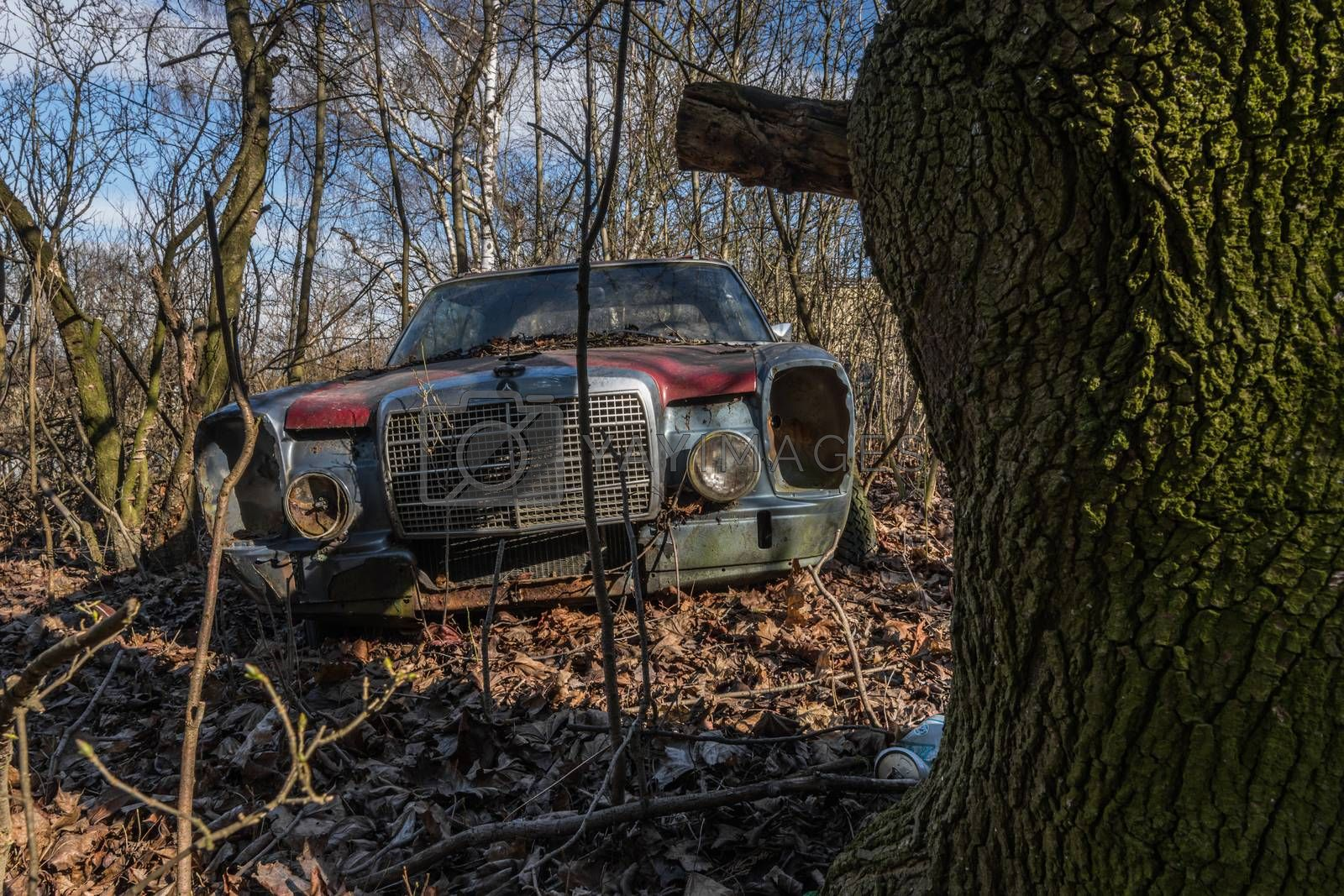 View from tree of old rusty Mercedes