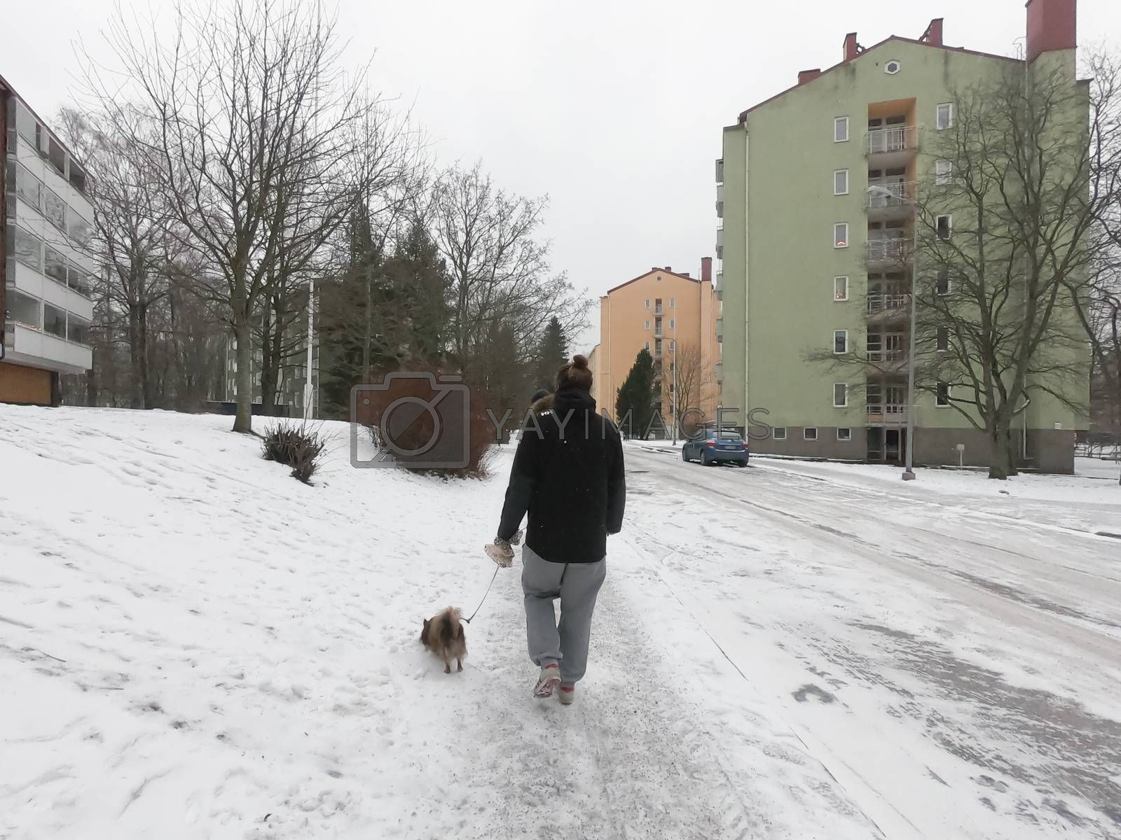 A man has walking with a pet dog on a leash at a nature park during covid-19 pandemic social distancing isolation in Helsinki, Finland
