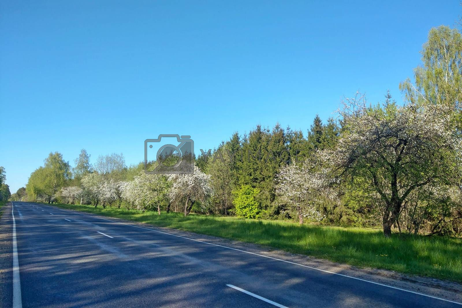 Nice view of a country road in spring on a clear day