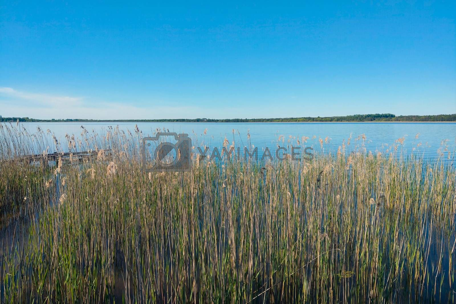 Lake view with small reeds on the shore