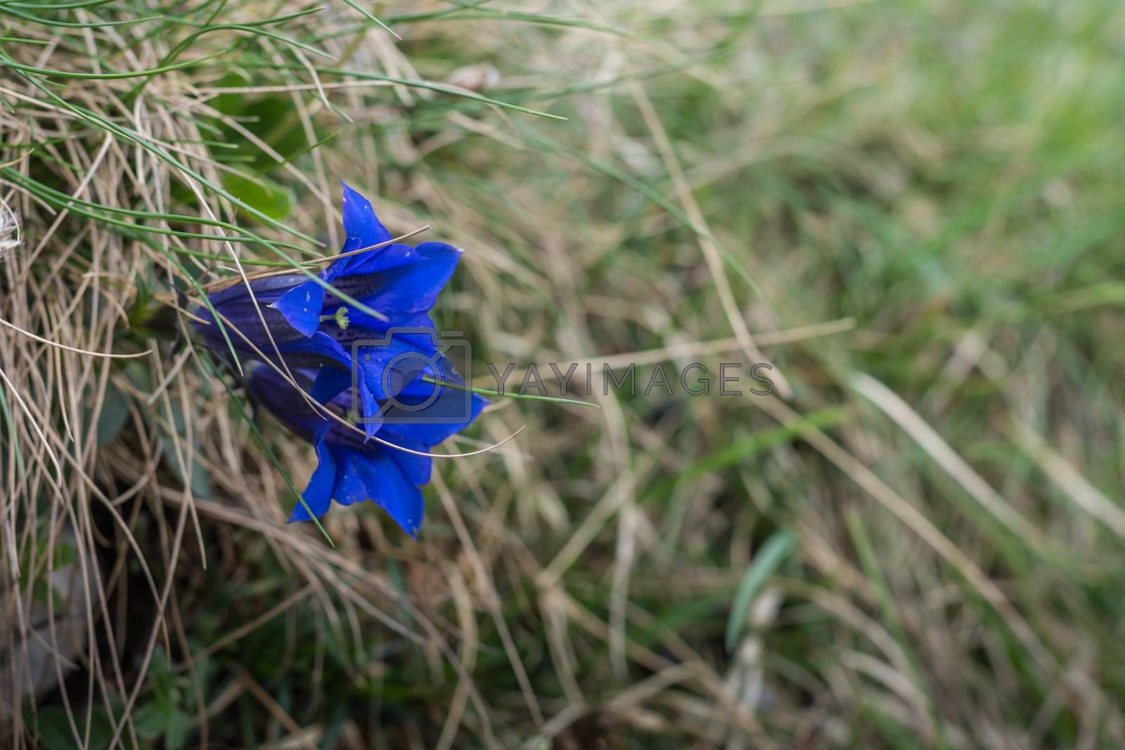 blue flower with grass in nature detail view